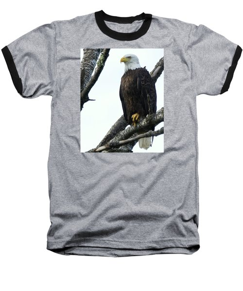 Baseball T-Shirt featuring the photograph Bald Eagle 4 by Steven Clipperton