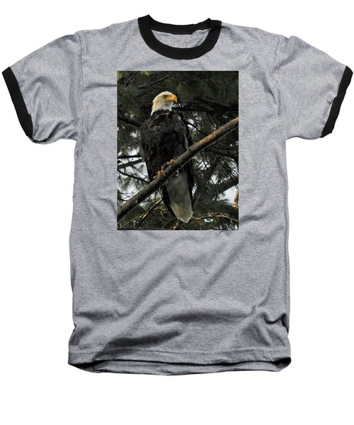 Baseball T-Shirt featuring the photograph Bald Eagle by Glenn Gordon