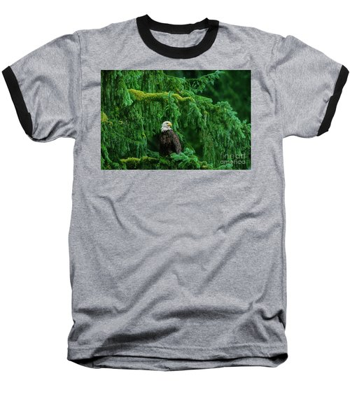 Baseball T-Shirt featuring the photograph Bald Eagle In Temperate Rainforest Alaska Endangered Species by Dave Welling