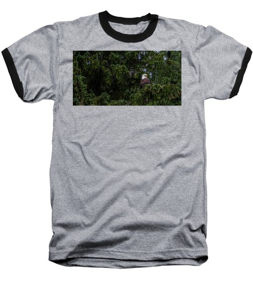 Bald Eagle In The Tree Baseball T-Shirt by Timothy Latta