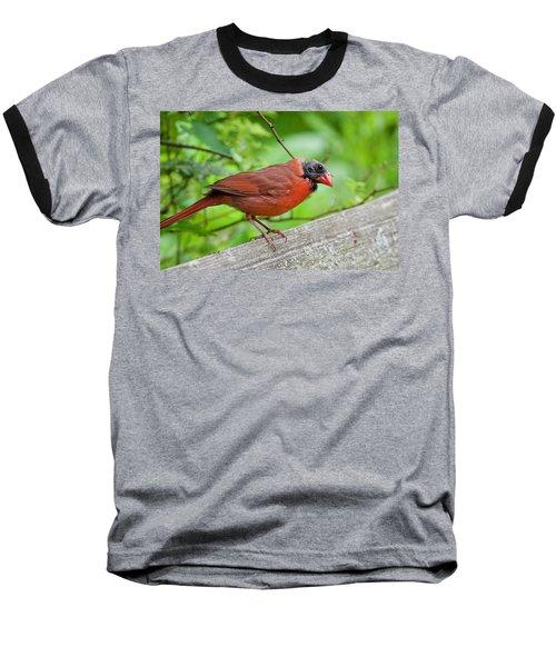 Bald Northern Cardinal Baseball T-Shirt