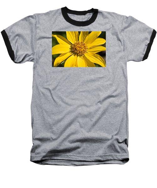 Balsamroot 2 Baseball T-Shirt