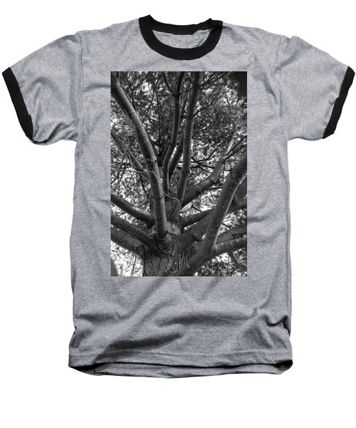 Bare Tree Baseball T-Shirt