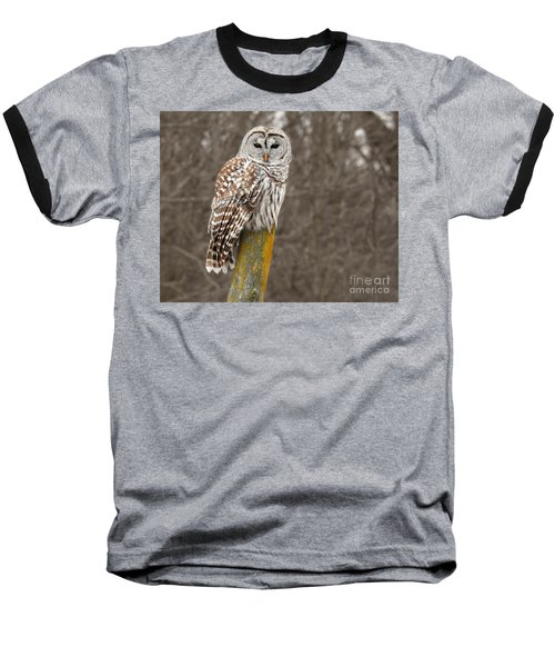 Barred Owl Baseball T-Shirt by Kathy M Krause
