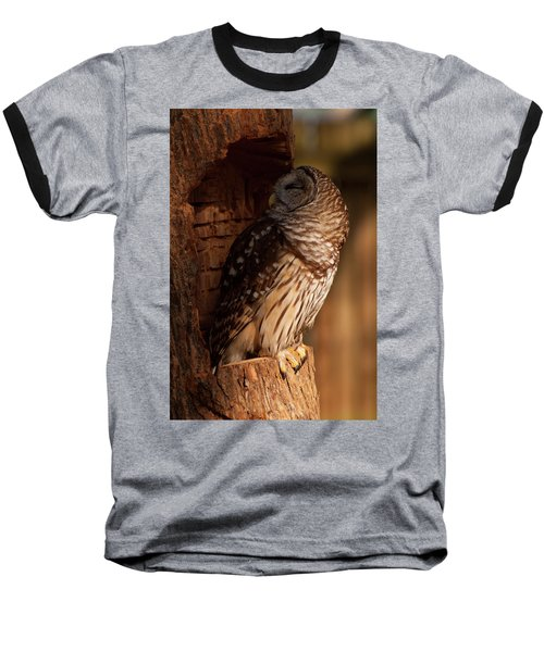 Barred Owl Sleeping In A Tree Baseball T-Shirt by Chris Flees