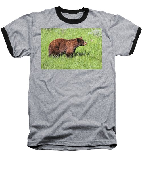 Bear Eating Daisies Baseball T-Shirt