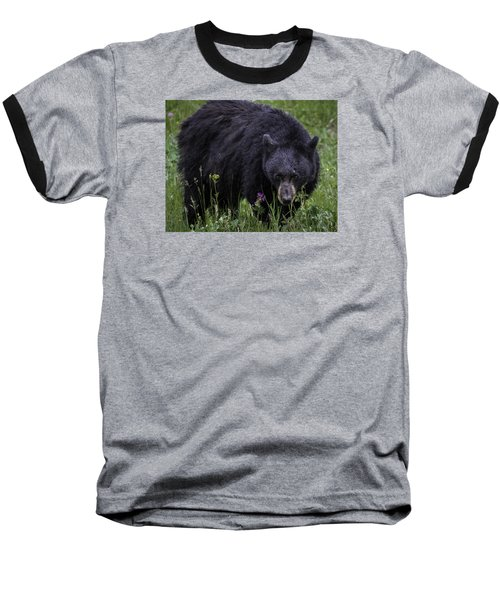 Bear Gaze Baseball T-Shirt