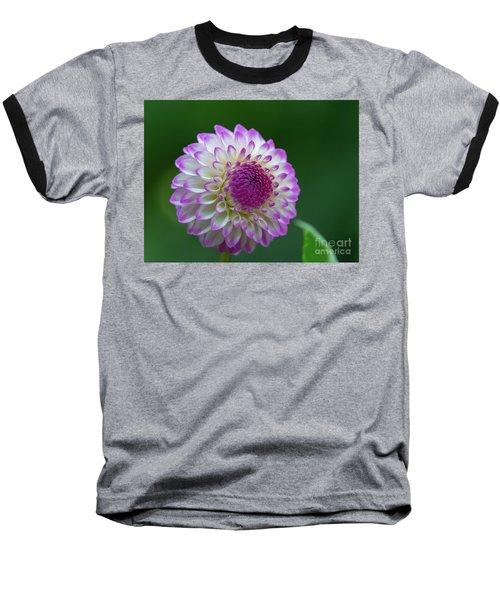 Beautiful Dahlia 2 Baseball T-Shirt