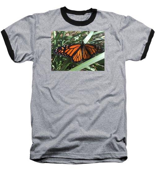Baseball T-Shirt featuring the photograph Beautiful Fall Butterfly  by Paula Brown