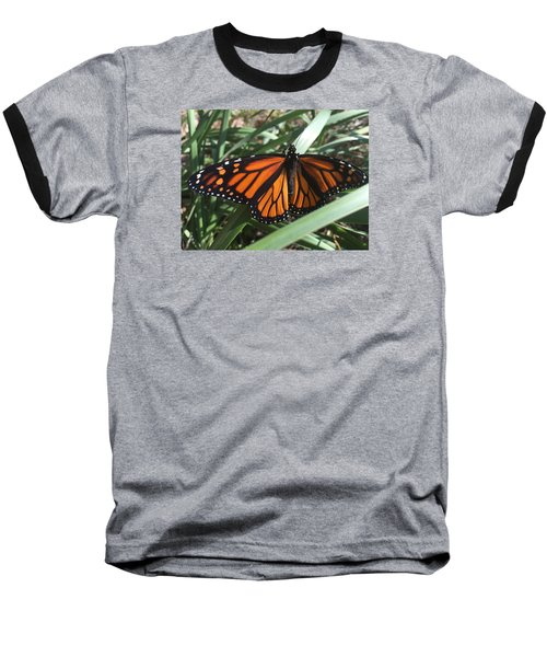 Beautiful Fall Butterfly  Baseball T-Shirt