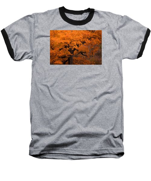 Beautiful Orange Tree On A Fall Day Baseball T-Shirt