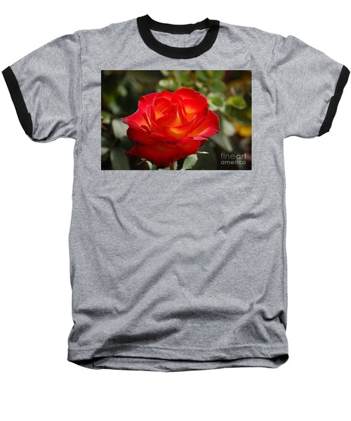 Beautiful Rose Baseball T-Shirt