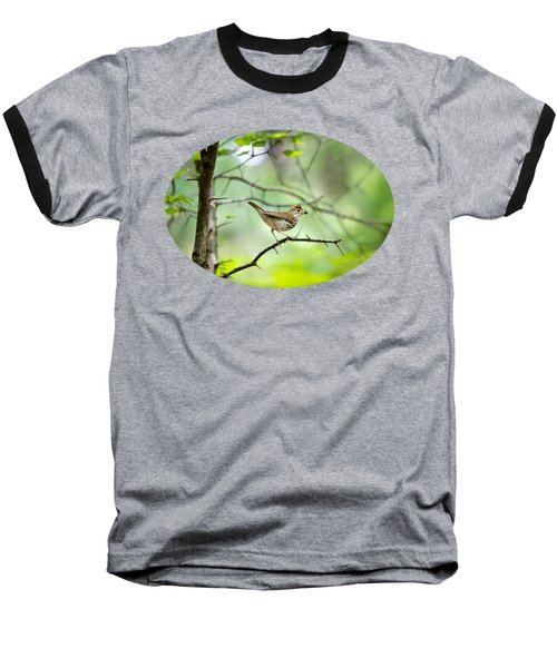 Beauty Of The Spring Forest Baseball T-Shirt by Christina Rollo