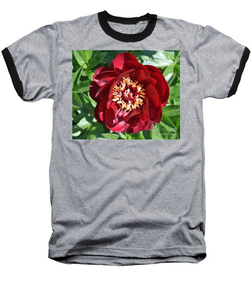 Beauty Peony Bloom Baseball T-Shirt by Marsha Heiken