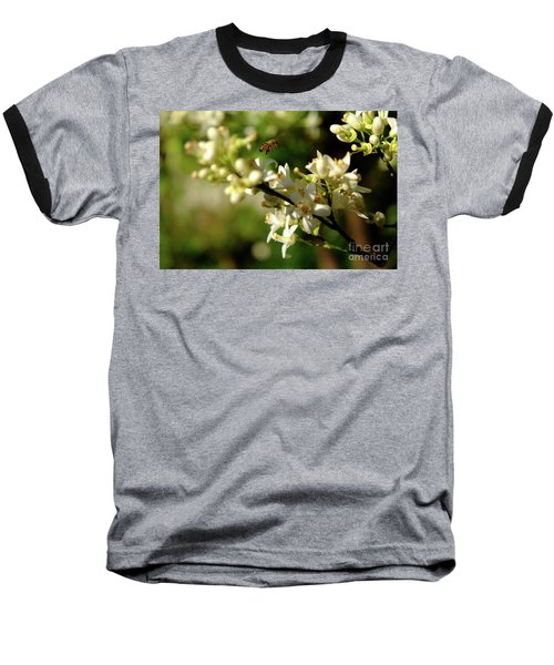 Bee Amongst The Flowers Baseball T-Shirt
