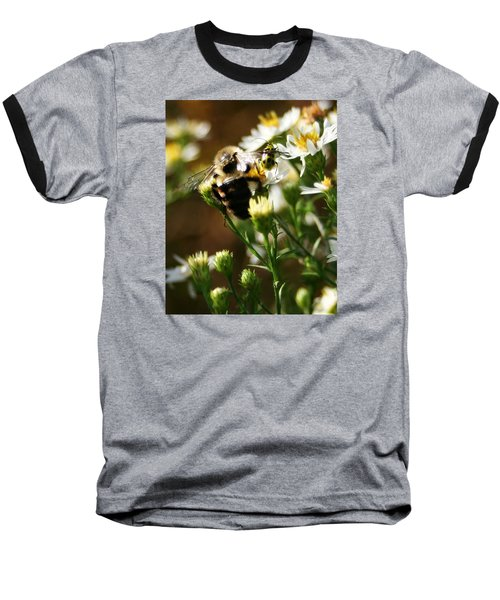 Bee And Spotted Cucumber Beetle On Aster Baseball T-Shirt