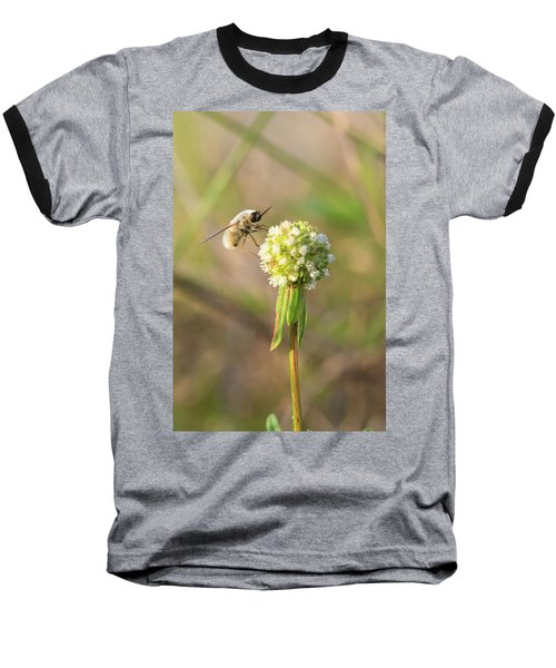 Bee Fly On A Wildflower Baseball T-Shirt by Christopher L Thomley