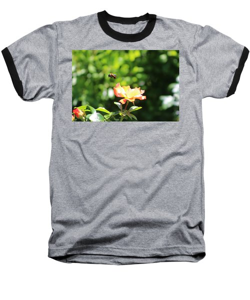 Bee Flying From Peach Petal Rose Baseball T-Shirt