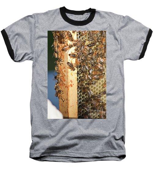 Bee Hive 4 Baseball T-Shirt by Janie Johnson