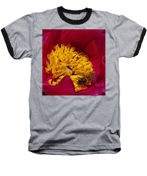 Bee On A Burgundy And Yellow Flower2 Baseball T-Shirt by John Topman