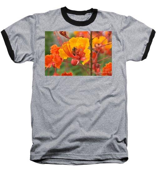 Bee Pollinating Bird Of Paradise Baseball T-Shirt
