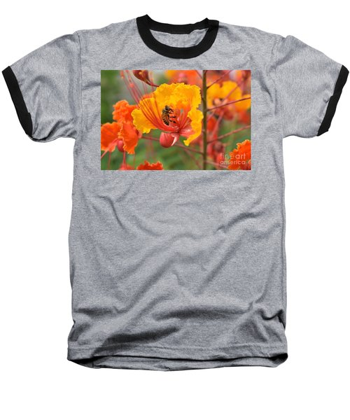 Bee Pollinating Bird Of Paradise Baseball T-Shirt