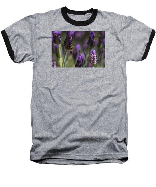 Bee's Delight Baseball T-Shirt by Laura Pratt