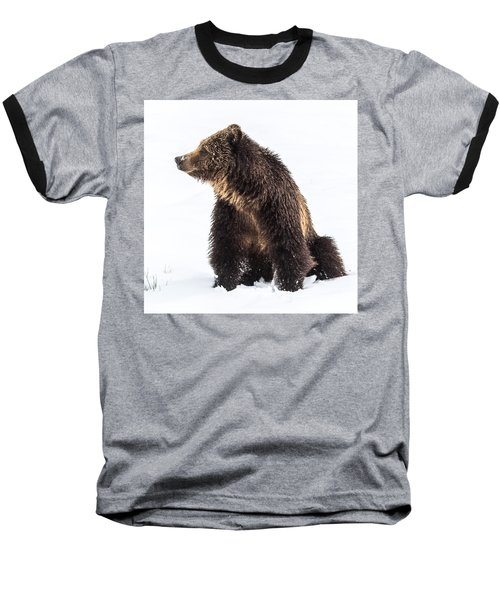 Baseball T-Shirt featuring the photograph Beryl Springs Grizzly Sow In Snow by Yeates Photography