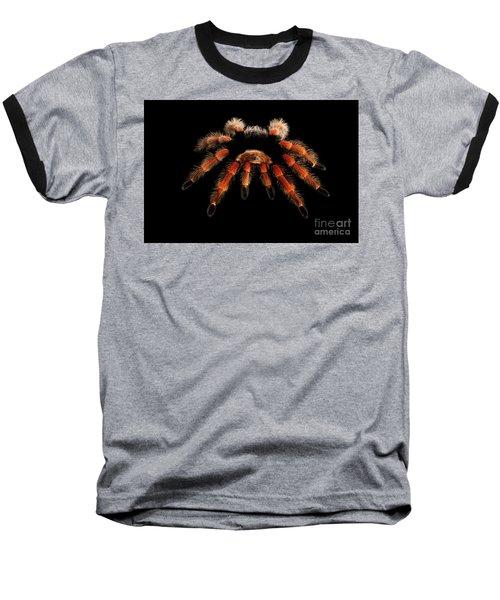 Big Hairy Tarantula Theraphosidae Isolated On Black Background Baseball T-Shirt