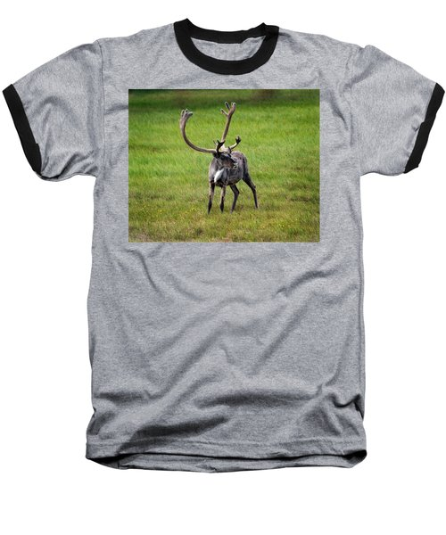Big Horn Baseball T-Shirt