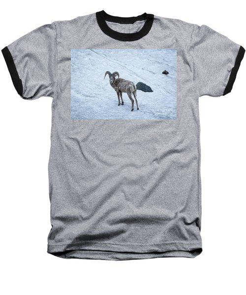 Big Horn Sheep  Baseball T-Shirt