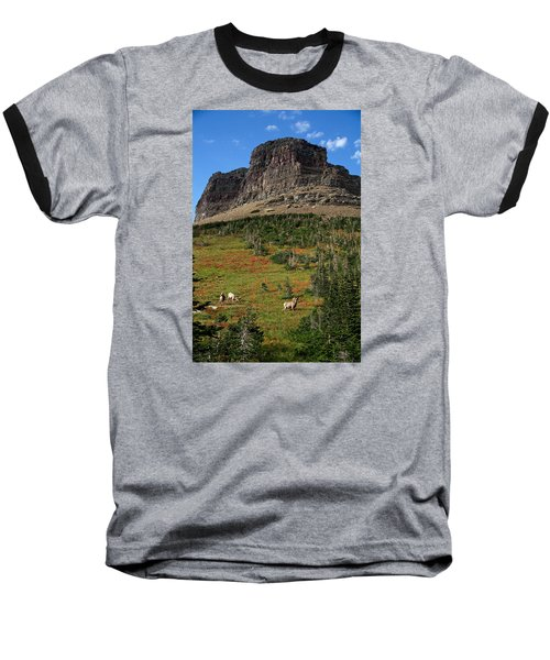 Big Horn Sheep Baseball T-Shirt by Lawrence Boothby