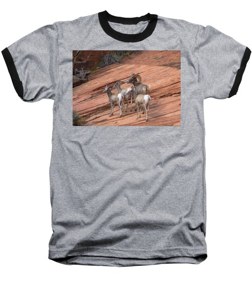 Big Horn Sheep, Zion National Park Baseball T-Shirt