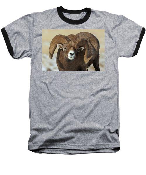 Bighorn Ram In Montana Baseball T-Shirt