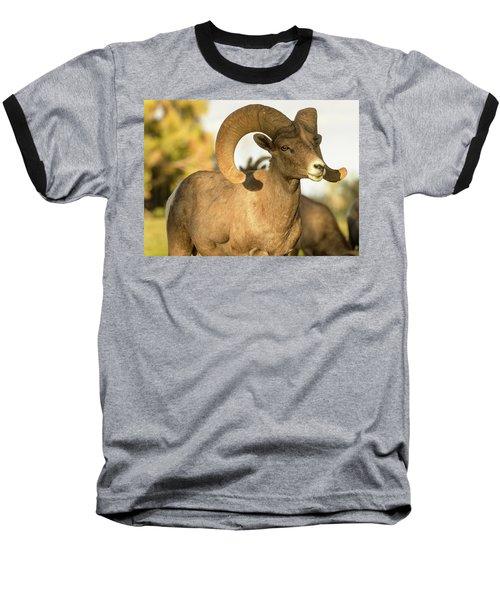 Bighorn Ram Baseball T-Shirt by Scott Warner