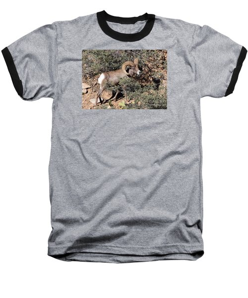 Baseball T-Shirt featuring the photograph Bighorn Ram by Richard Lynch