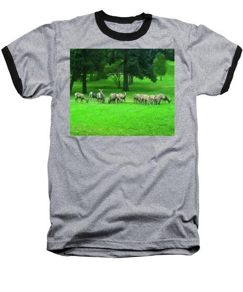 Baseball T-Shirt featuring the digital art Bighorn Sheep Ewes  by Chris Flees