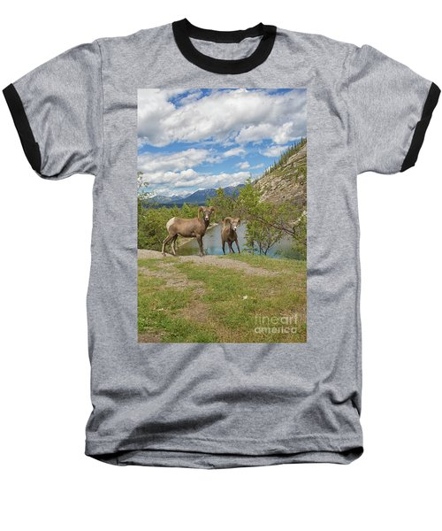 Bighorn Sheep In The Rocky Mountains Baseball T-Shirt by Patricia Hofmeester