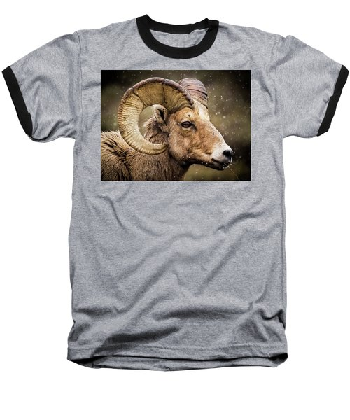 Bighorn Sheep In Winter Baseball T-Shirt