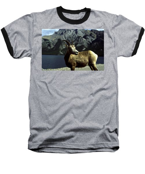 Baseball T-Shirt featuring the photograph Bighorn Sheep by Sally Weigand