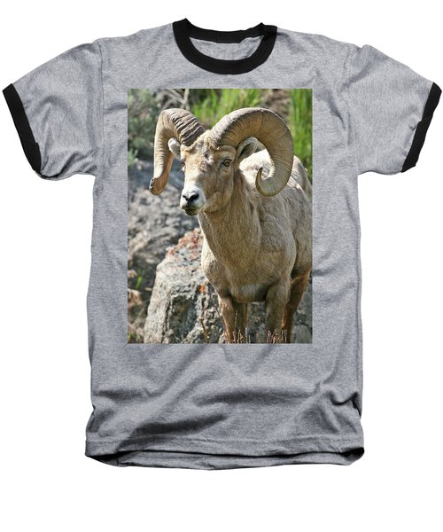 Baseball T-Shirt featuring the photograph Bighorn Sheep by Wesley Aston
