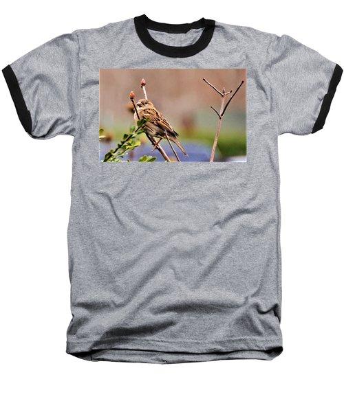 Bird In The Cold Baseball T-Shirt