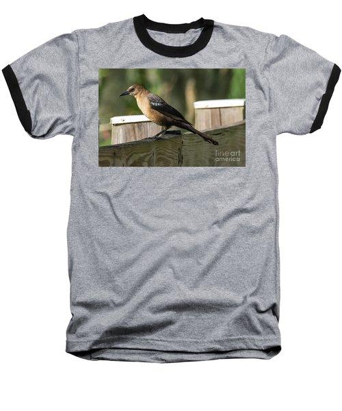 Grackle Baseball T-Shirt