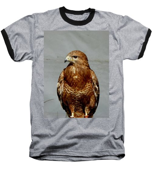 Bird Of Prey  Baseball T-Shirt