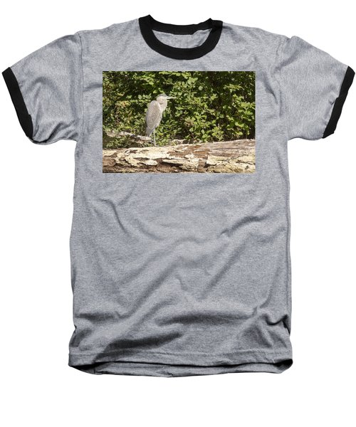 Bird On A Log Baseball T-Shirt