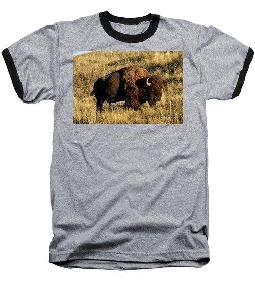 Bison  Baseball T-Shirt by Cindy Murphy - NightVisions