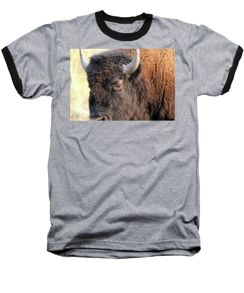 Bison Head Study Baseball T-Shirt