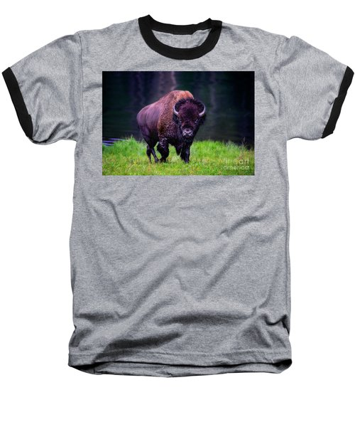 Bison Of Yellowstone Baseball T-Shirt by Jim  Hatch