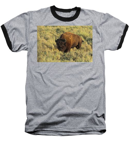 Bison Baseball T-Shirt