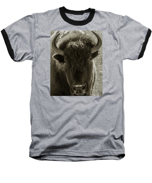 Bison Surprise Baseball T-Shirt by Elizabeth Eldridge
